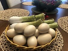 Vintage Collectible Costa Bossano Egg Mushrooms Plate Made in Italy