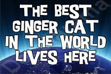 The Best Ginger Cat In The World Lives Here Fridge Magnet Gift/Present Kitten