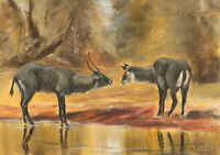 James Frank Adams (1923-2008) - Signed 1985 Oil, Study of Antelope