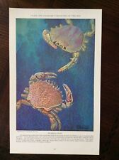 1928 vintage Original magazine illustration Swimming Crabs