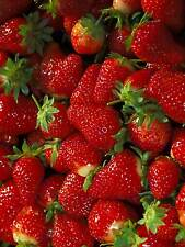 PHOTO FRUIT STRAWBERRY JUICY RED FOOD POSTER ART PRINT PICTURE BB276B