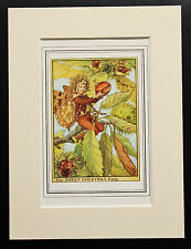 Sweet Chestnut Flower Fairy - Mounted Original 1930s Cicely Mary Barker Print