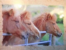 Handmade 3 Shetland Pony Heads Blank Greeting Card