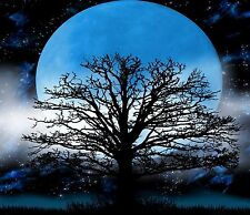 TREE BLUE MOON FANTASY COMPUTER MOUSE PAD OR HOT PAD  7 x 9