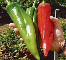 NUMEX BIG JIM pure seeds