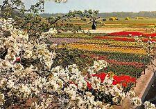 BT2983 Tulipshow frans Roozen Vogelenzang       Netherlands