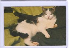 VINTAGE CHAT DARK BLACK & WHITE TABBY CAT REPRO REPRODUCTION POSTCARD
