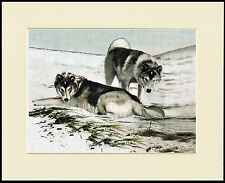 SIBERIAN HUSKY SLEDGE DOGS IN THE SNOW LOVELY DOG PRINT MOUNTED READY TO FRAME