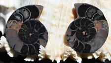 1153 RARE 1 in 100 BLACK Ammonite PAIR Deep Crystals MEDIUM FOSSIL 29grams 42mm
