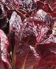 Lettuce Seed Heirloom SUPER RED ROMAINE 5000 SEEDS Flavorful Salad Greens