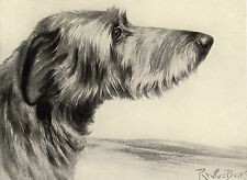 More details for scottish deerhound head study old 1934 dog sepia art print page by ward binks