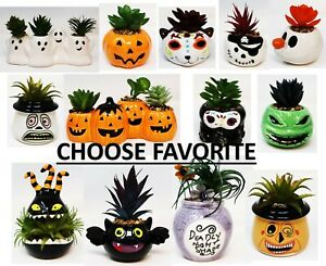 Walgreens Exclusive Halloween Succulent Faux Cactus Ceramic Jar Plant 2021 Rare