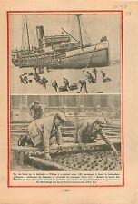 Baleinier Viking Brise-Glace Sagona/Jardin des Tuileries Paris 1931 ILLUSTRATION