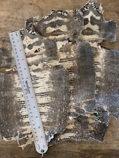 3 Genuine  Lizard  Skins off White Assort. 11 To 17 Inch. Leather Hides