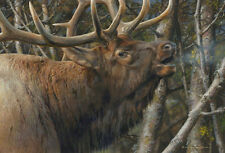 """""""Mating Call Bull Elk"""" Carl Brenders Limited Edition Fine Art Giclee Canvas"""