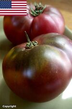 Cherokee Purple Heirloom Tomato Seeds- 75+ 2017 Seeds   $1.69 Max Shipping/order