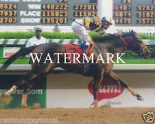 STREET SENSE 2008 Kentucky Derby Winner Horse Racing 8 x 10 Photo
