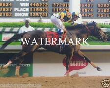 STREET SENSE 2008 Kentucky Derby Winner Horse Racing 8 x 10 Photo
