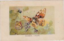 CARTE POSTALE ANCIENNE FANTAISIE/PAPILLON POLYOMMATE-ATALANTE- annee 1909