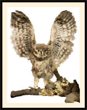 Owl 1002, Cross Stitch Kit