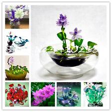Bonsai Water Hyacinth Seeds Plants Flower Lotus Live Floating Pond 50pcs/bag