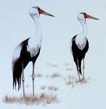 TRAMPOLIERE MALAWI WWF Uccelli UCCELLO BUSTA Primo Giorno 1° FDC 495