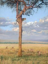 """Sanctuary"" Guy Combes Fine Art Limited Edition Canvas - Leopard"