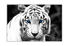 Landscape White Tiger Blue Eyes Poster Prints Wall Art Modern Animal Pictures