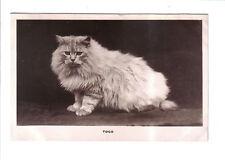 Vintage Cat Postcard.Togo.c1930's
