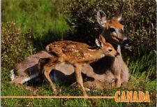 Whitetail Fawn Deer Canada Vintage UNUSED Postcard F45