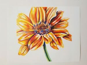 Fine Art Print Of A Colored Pencil Drawing Of A Yellow Flower 8.5x11 Signed