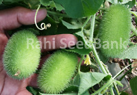 Wooly Bear Gourd - An Interesting & Unusual Addition for Your Garden