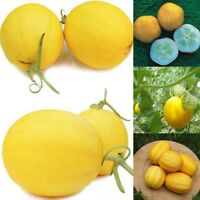 50 Samen Zitronengurke Crystal Lemon Gelbe Runde Gurken Gurkensamen Gurke Neu