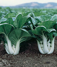 BABY CHOI CHINESE CABBAGE 50 SEEDS [VEGETABLE SEEDS]
