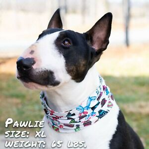 Birthday Pawty Pup Scruff, dog neck gaiter, easier than bandanas