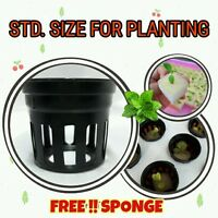 Heavy Duty Mesh Net Basket Pot+Sponge: Hydroponics Herb Grow Plant