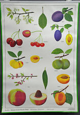pull-down wall chart stone fruit cherry plum peach country style decoration