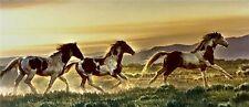 Early Morning Run by Nancy Glazier Horses Print 16x34