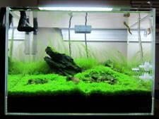 *Buy 2 Get 1 Free* Micranthemum Monte Carlo Easy Carpet Live Aquarium Plant ✅