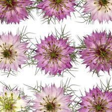 JUNGFER IM GRÜNEN rosa-weiß MIX 150 Samen  NIGELLA DAMASCENA seeds BAUERNGARTEN