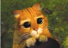 Disney Pixar SHREK - PUSS IN BOOTS Cat SAD EYES Window Cling Decal Sticker - NEW