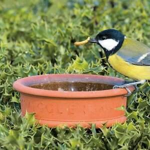 50 / 50 Mix Premium Dried Mealworms / Calci worm Wildlife Bird Food Refill Bags