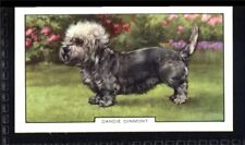 Gallaher Dogs 2nd Series 1938 - Dandie Dinmont No. 36