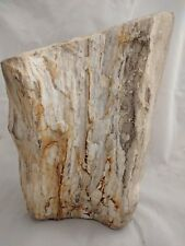 Large Petrified Wood Log Self standing Fossilized Trunk Fossil w/ Druzy Crystals