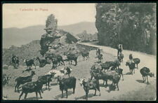 Goat shepherd in Calanques of Piana Corsica France original old 1910s postcard