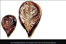 Catappa Leaf x 3 pcs-  Indian Almond Leaves For Betta Fish Cleaning Treatment LS