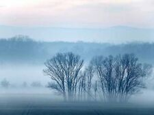 Fog Trees Landscape Mist Photo Poster Print