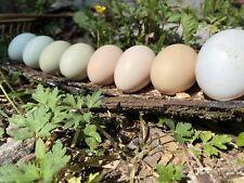 End Of Summer Sale Barnyard Mixed Flock Fertile Chicken Hatching Eggs