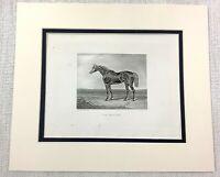 1843 Antique Horse Print Sir Hercules Racehorse Equestrian Victorian Engraving