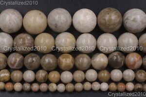 """Natural Coral Fossil Gemstone Round Loose Spacer Beads 4mm 6mm 8mm 10mm 12mm 16"""""""